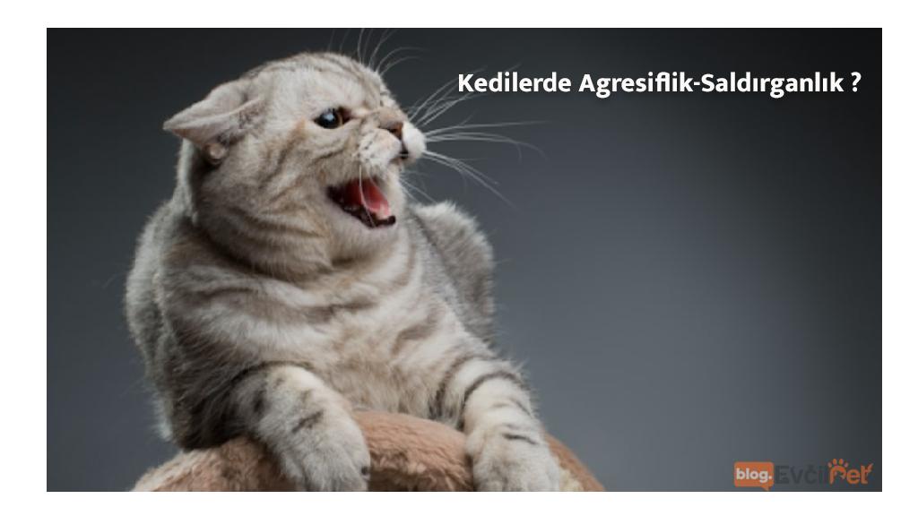 Kedilerde Agresiflik-Saldırganlık ?