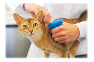 kedi mikro çip uygulaması